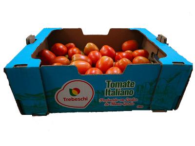 Tomate Italiano produzido em Estufa