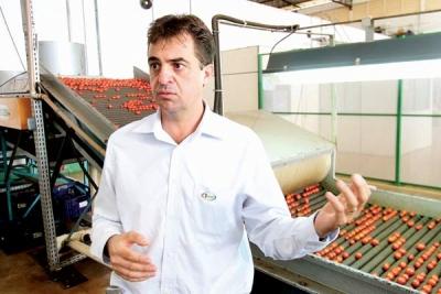 Empresa de Araguari se destaca e produz 18 t de tomate gourmet por dia